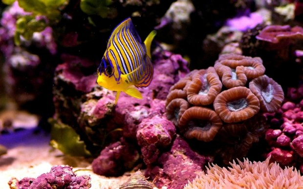 Мир кораллов 01