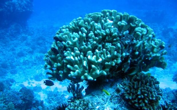 Мир кораллов 02