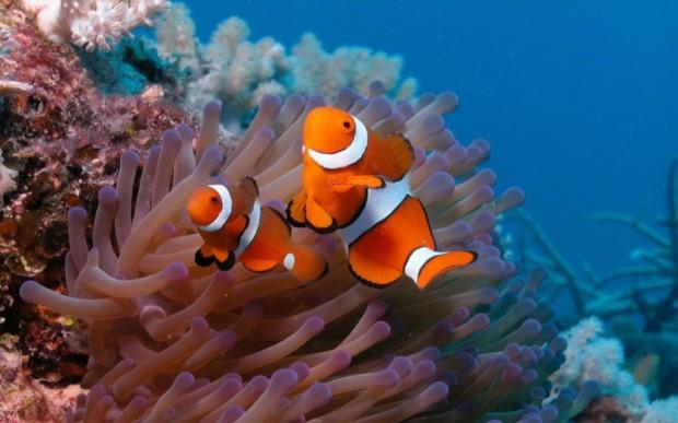 Мир кораллов 03