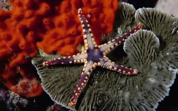 Мир кораллов 08