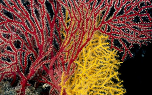 Мир кораллов 11