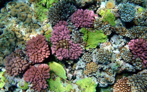 Мир кораллов 13