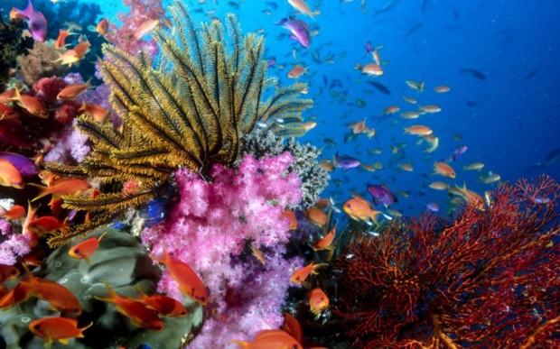 Мир кораллов 14