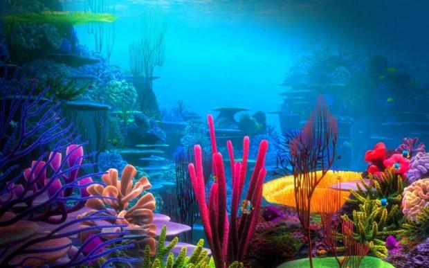 Мир кораллов 15
