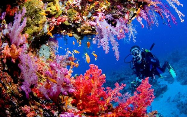 Мир кораллов 17