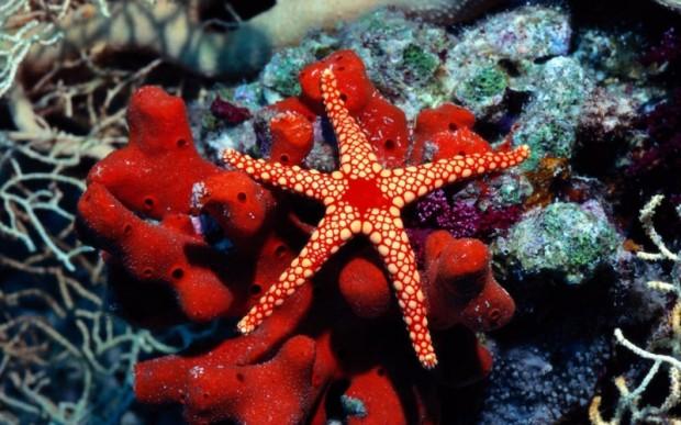 Мир кораллов 18