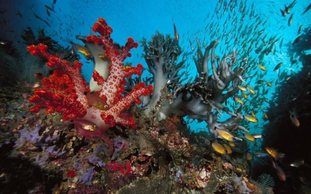 Мир кораллов 20