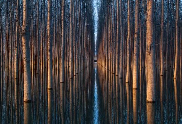 Обильные дожди залили посадку из высоких деревьев, создавая строгую геометрическую картину природы.