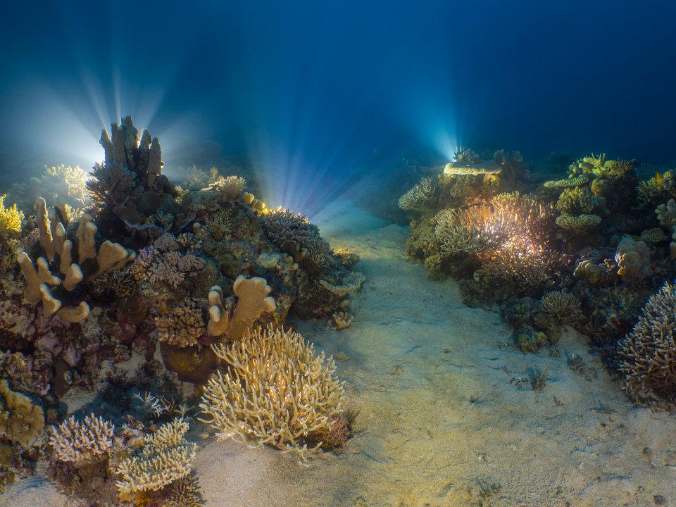 15 невероятных, удостоенных наград подводных фотографий, от которых захватывает дух