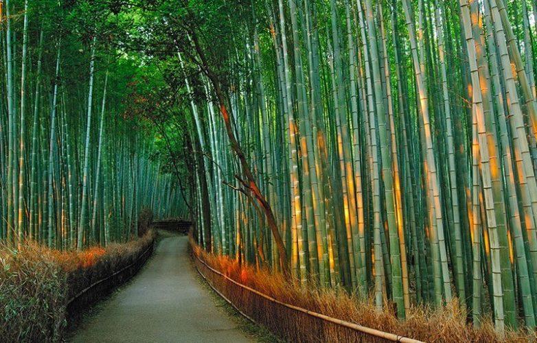 Бамбуковый проход в Японии