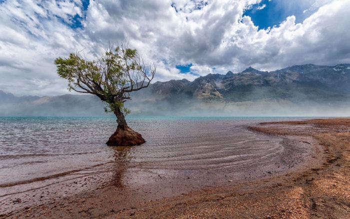 Одинокое дерево Гленорчи (Lone Tree Glenorchy). Автор фото: Энтони Харрисон (Anthony Harrison).