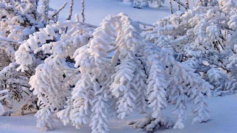 Прелесть зимы 03