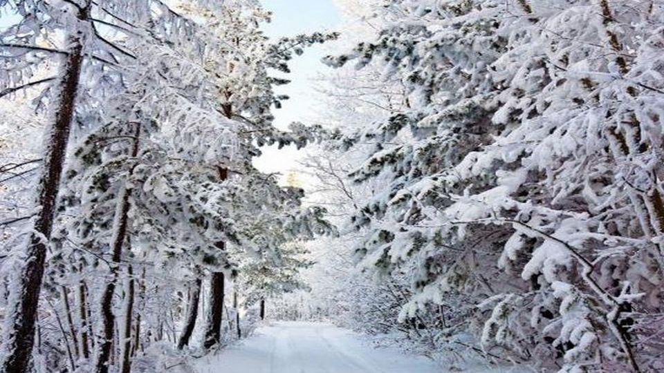 Прелесть зимы 12